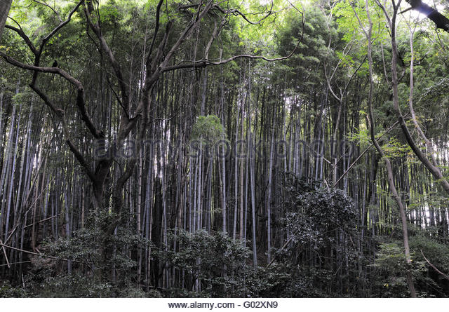 gr ner bambus stock photos gr ner bambus stock images. Black Bedroom Furniture Sets. Home Design Ideas