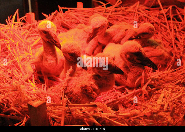 Heat Lamp Animal Stock Photos Amp Heat Lamp Animal Stock