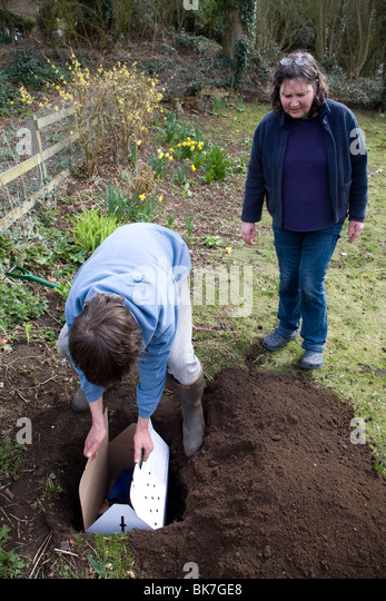 teenage boy digging hole in garden to bury pet cat stock image