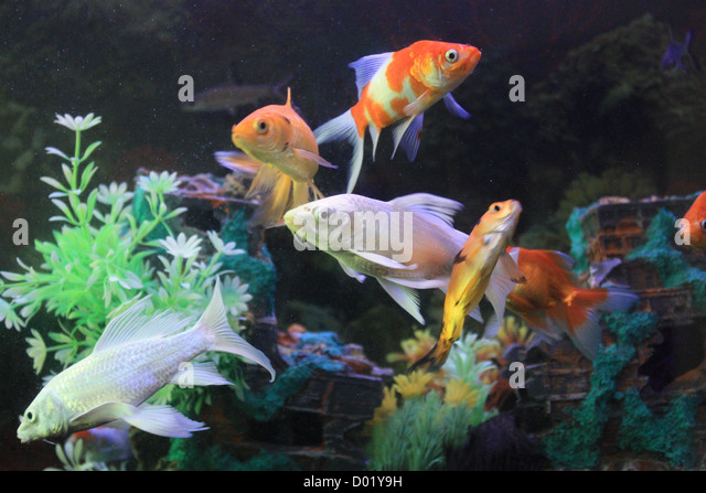 freshwater fish aquarium fish tropical fish pictures of fish fish tanks
