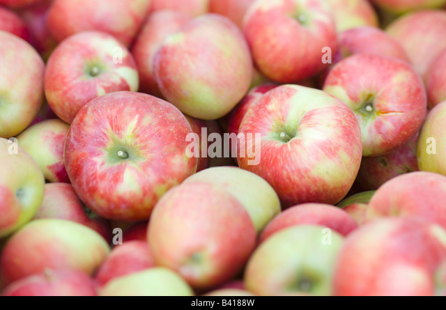 how to tell if honeycrisp apples are ripe
