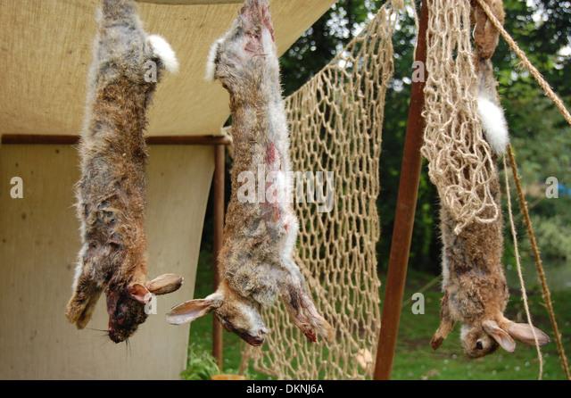 dead rabbits stock photos  u0026 dead rabbits stock images