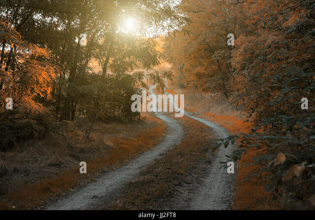 Autumn forest road - Stock Image