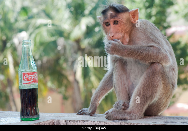 cola in inida Morarji cola vs coca-cola coca-cola india's web site makes no mention of the drink's chequered indian past in 1977, indira gandhi, who was the prime minister for .