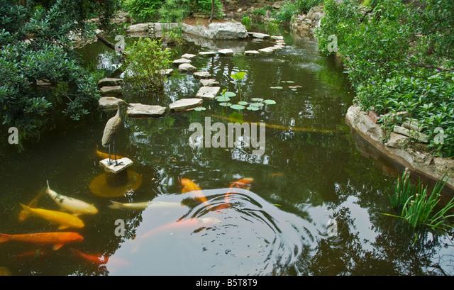 Superb Texas Hill Country Austin Zilker Botanical Garden Taniguchi Japanese Garden  Koi Pond   Stock Image