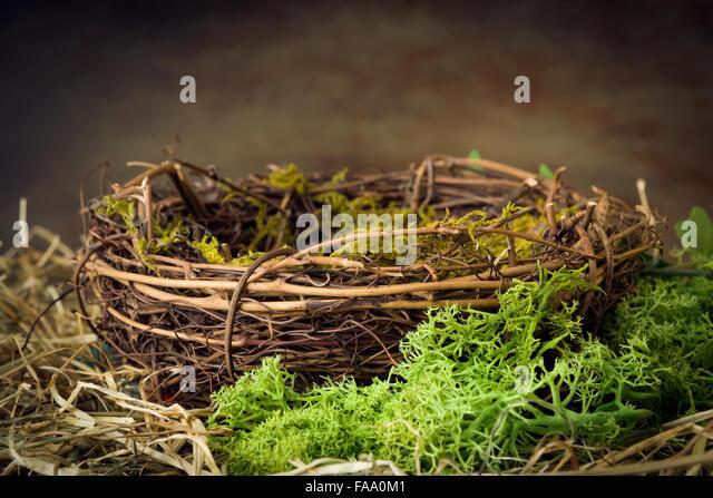 empty birds nest stock photos empty birds nest stock images alamy. Black Bedroom Furniture Sets. Home Design Ideas
