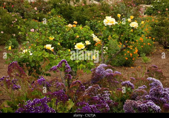 CALIFORNIA   Rose Garden Area Of The Flower Gardens At Mission San Juan  Capistrano.