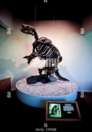 mar 09 2011 los angeles california usa the skeleton of