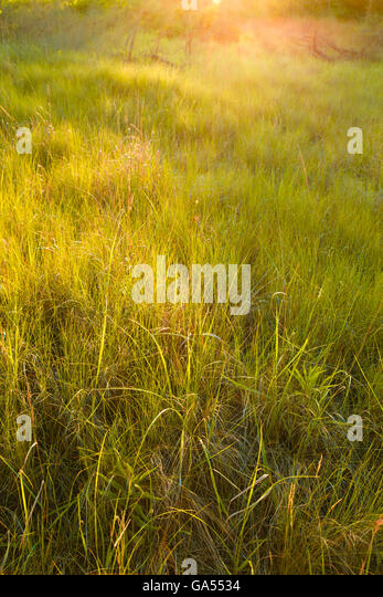 natural wood meadow grass - photo #18