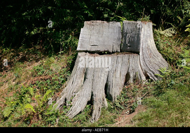 Garden Chair Carved From An Old Tree Stump   Stock Image
