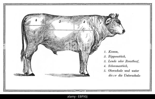 cuts of meat diagram stock photos  u0026 cuts of meat diagram