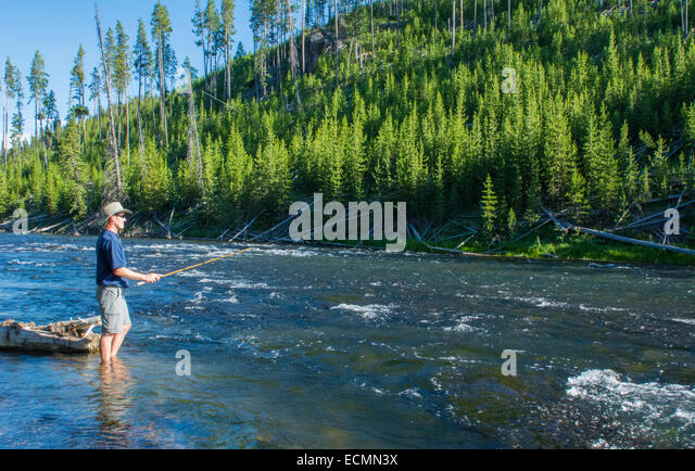 Fly fishing wyoming stock photos fly fishing wyoming for Yellowstone national park fishing