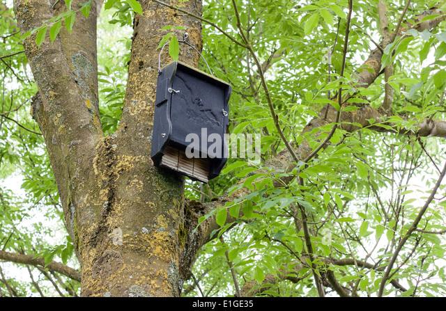 Bat boxes uk stock photos bat boxes uk stock images alamy for Bat box obi