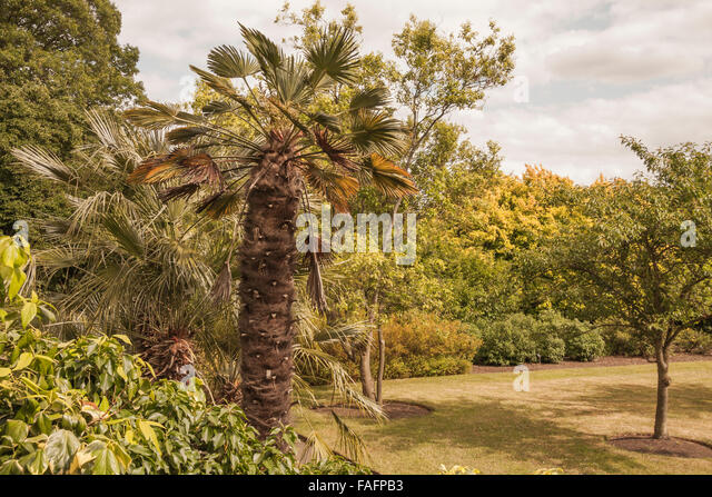 Royal palm trees stock photos royal palm trees stock for Garden trees london