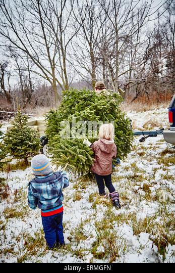 Family Children Child Carrying Christmas Tree Boy Girl Kids Stock ...