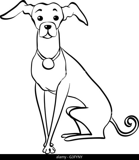 vector sketch funny italian greyhound dog sitting stock image