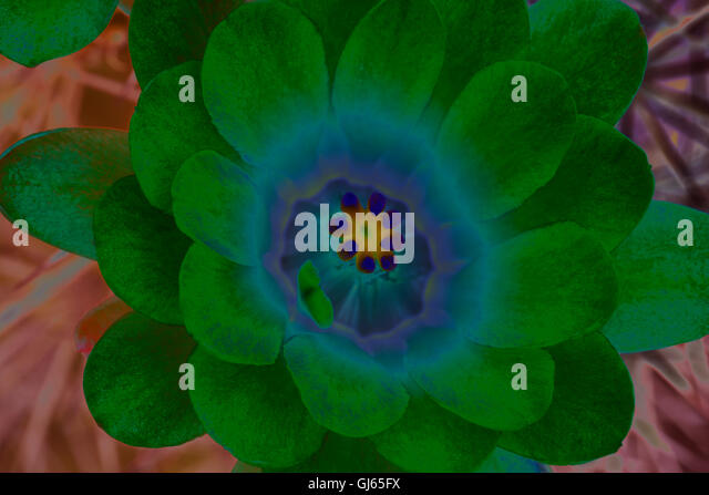 Cactus neon stock photos images alamy