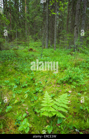 Overgrown forest stock photos overgrown forest stock for Forest floor definition