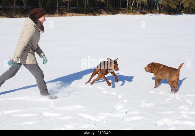 Man And Two Dogs Asleep In Park