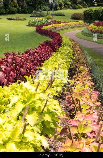 Flower Garden Peradeniya Kandy Stock Photos Flower Garden Peradeniya Kandy Stock Images Alamy