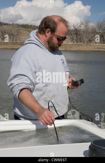 Montana fish stock photos montana fish stock images alamy for Fish wildlife and parks