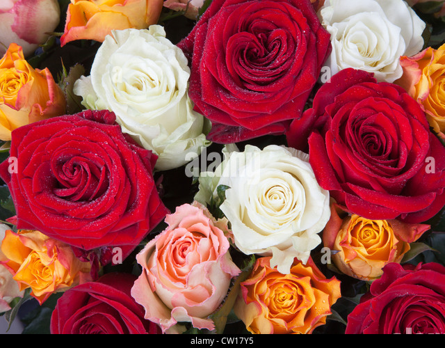 Different color roses yellow stock photos different for Different color roses bouquet