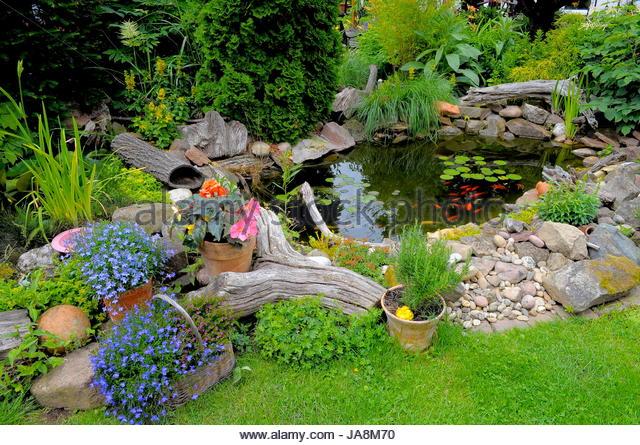 Gartenteich pflanzen stock photos gartenteich pflanzen for Gartenteich mit goldfischen