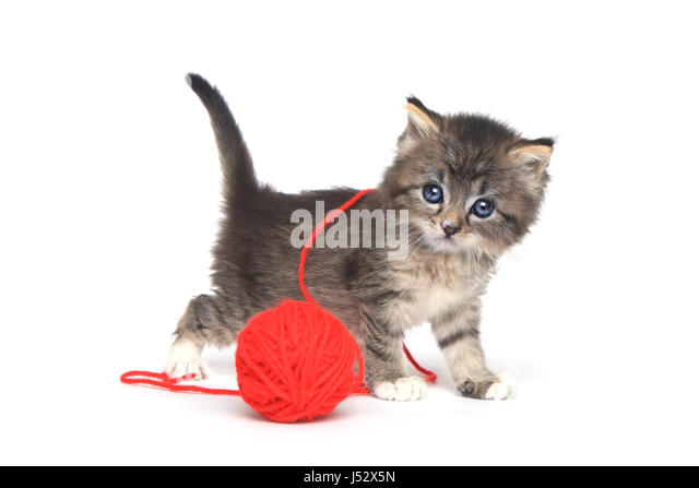 Kitten Playing With Yarn Stock Photos & Kitten Playing ...