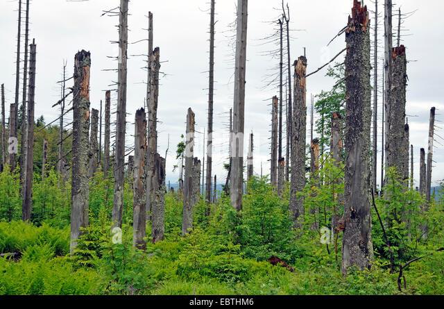 Acid Rain Forest Stock Photos & Acid Rain Forest Stock Images - Alamy