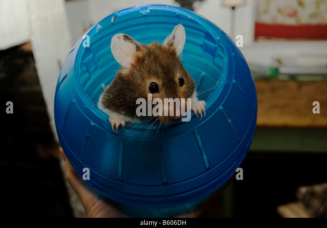 Pet products stock photos amp pet products stock images alamy