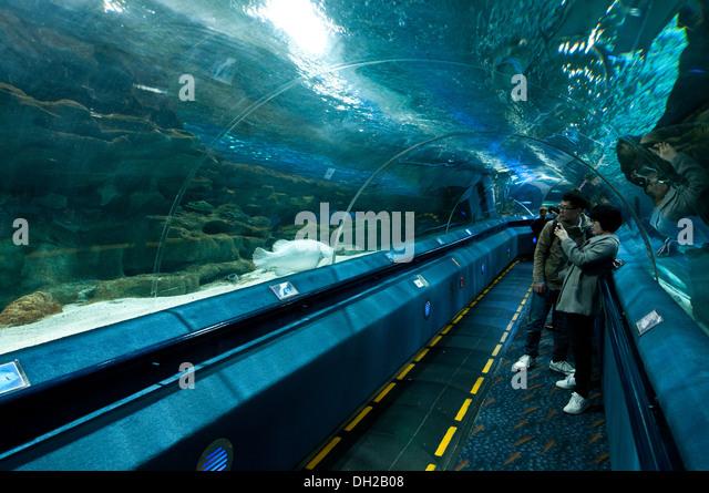 acrylic underwater tunnel in Beijing Gongti Richina Underwater World ...