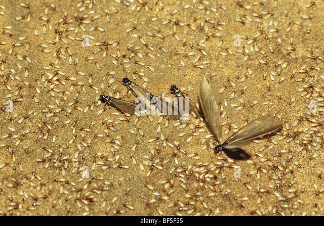 B And B Termites Termites Stock Photos ...