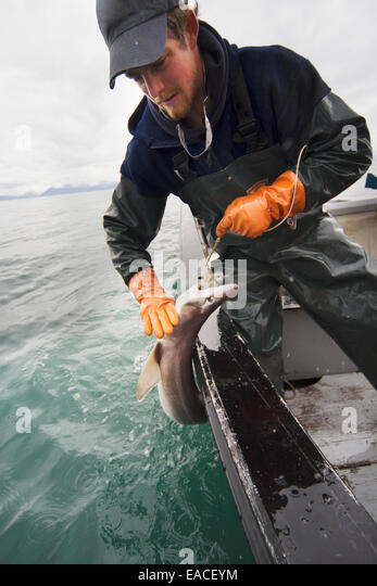 Commercial halibut fishing hand using stock photos for Commercial fishing gear
