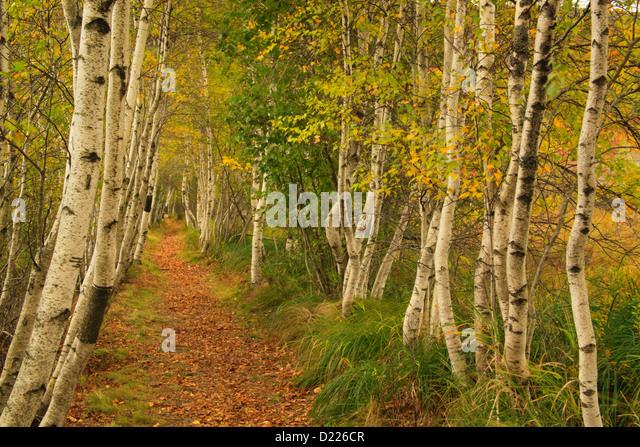 Hemlock Road, Wild Gardens Of Acadia, Acadia National Park, Maine, USA