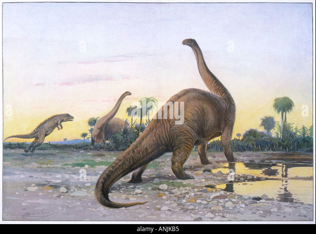 Apatosaurus Stock Photos & Apatosaurus Stock Images