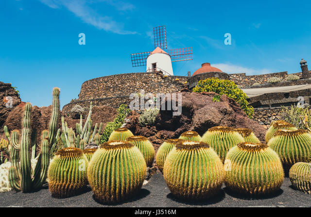 view of cactus garden jardin de cactus in guatiza popular attraction in lanzarote