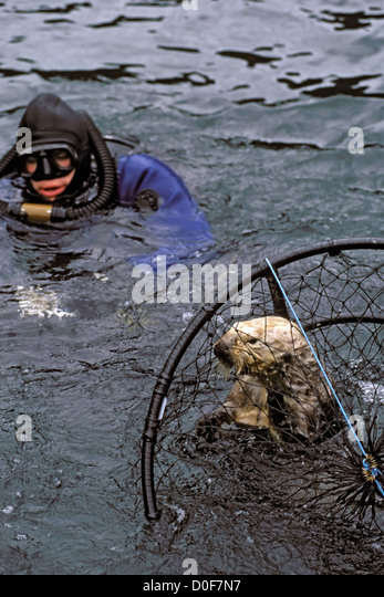 exxon valdez oil spill research paper If anything positive has resulted from the massive exxon valdez oil spill tional oil spill response technologies research concerning these issues has been given new momen- bioremediation for marine oil spills to 70 s~ ~.