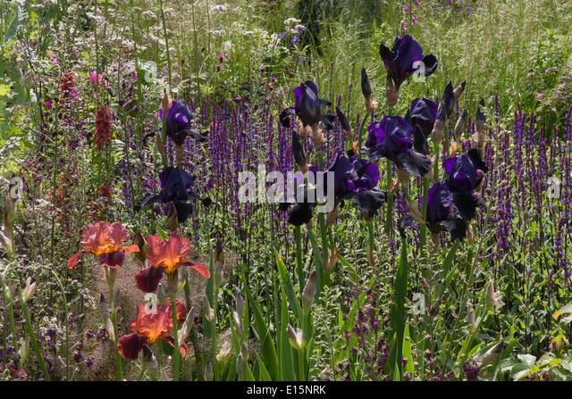 rhs chelsea flower show 2014 cloudy bay sensory garden designer andrew wilson gavin mcwilliam