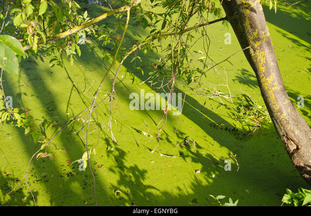 Overgrown garden pond stock photos overgrown garden pond for Green pond water