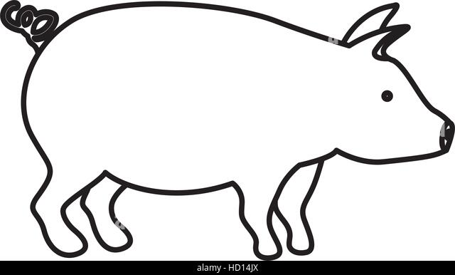Simple Animal Sketch Templates together with Bizarre Food additionally tasty pig shower curtain 1283988006 additionally Bizarre Food moreover Sketch Pig Porkengraved Boar Pork Different 531804376. on baby pig bacon