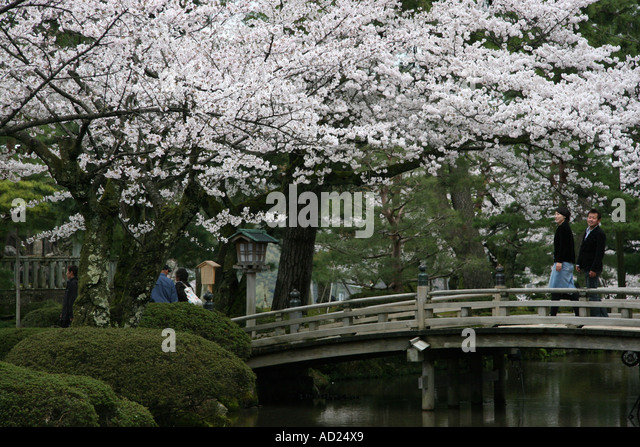 Japanese Garden Cherry Blossom Bridge kenrokuen garden bridge stock photos & kenrokuen garden bridge