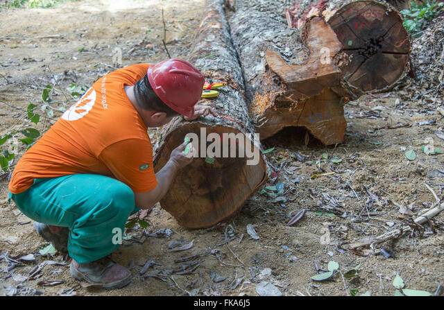 Kabatasan timber extraction co