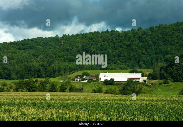 Typical Vermont Farm Landscape With Old Stone Farmhouse Long Barns Silo Hills In Background And Cornfield