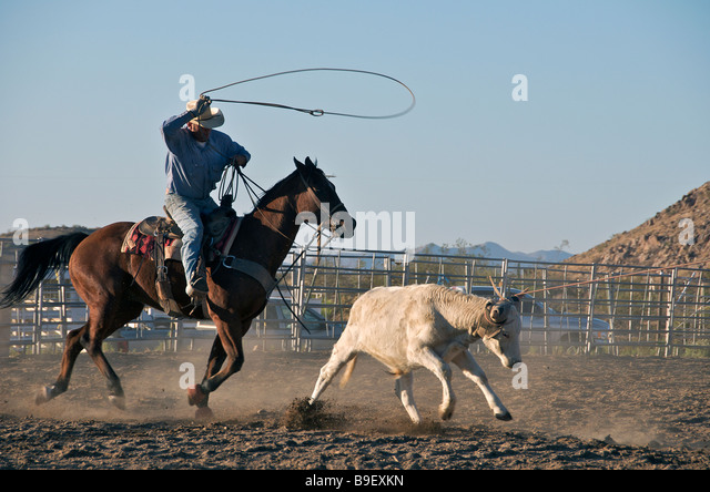 Cowboy Lasso Calf Stock Photos Amp Cowboy Lasso Calf Stock