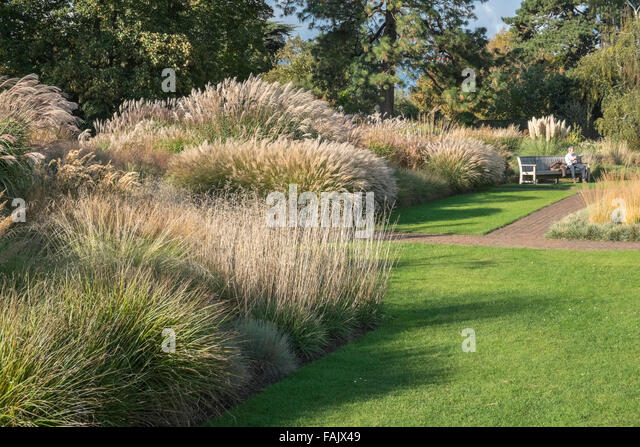 Autumn garden uk sunshine stock photos autumn garden uk for Ornamental grass garden