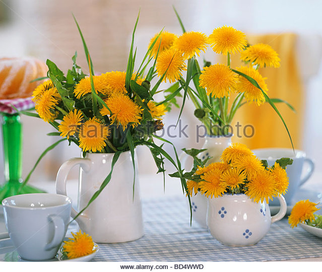 Dandelions food stock photos dandelions food stock for Dandelion flowers and gifts