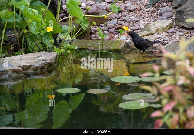 Wildlife garden pond stock photos wildlife garden pond for Design wildlife pond