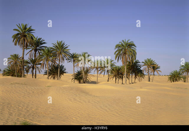 Wild date palm stock photos amp wild date palm stock images alamy