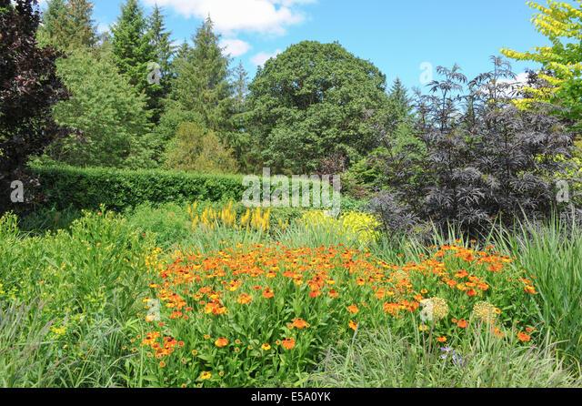 Typical English Garden Plants Flowers Stock Photos
