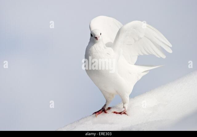 white pigeon catholic singles 100% free online dating in white pigeon 1,500,000 daily active members.